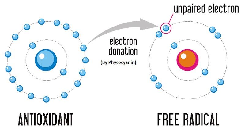 普天登能誘發細胞製造强力的抗氧化劑:SOD和 CAT來消滅引發癌症的自由基