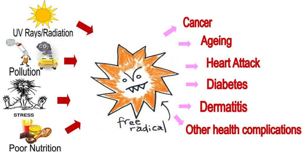自由基是導致衰老及癌症等慢性病的元凶