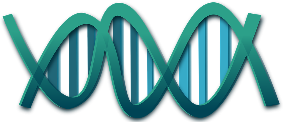 兩種因子突變:EGFR & ALK