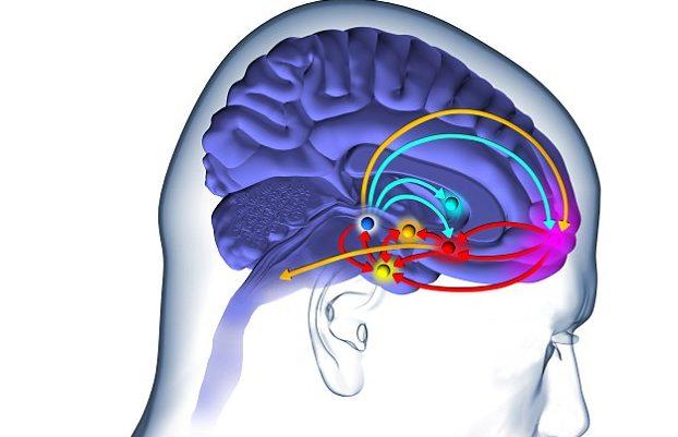 日夜節奏的脫序會造成大腦主要荷爾蒙的不正常分泌