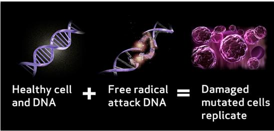 自由基是引發癌症的元凶
