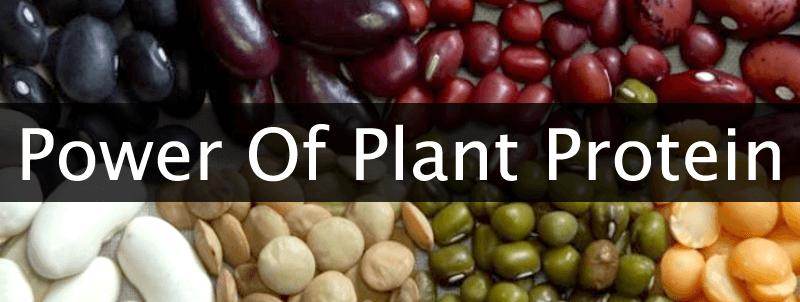 癌症患者較適宜吃植物性蛋白質