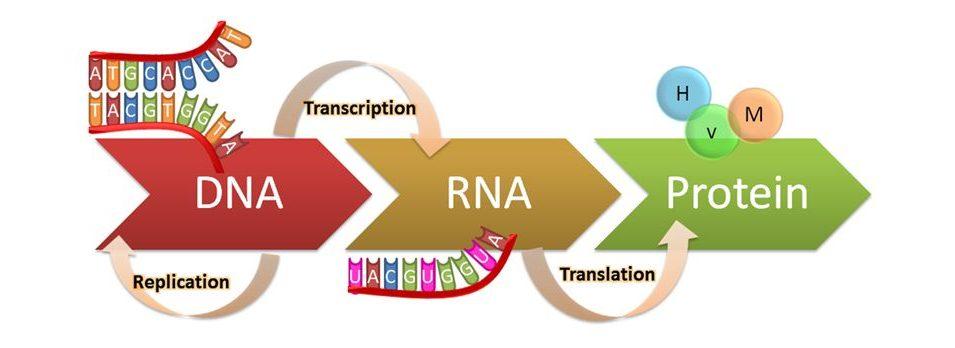 什麽RNA基因檢測?